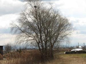213:冬樹