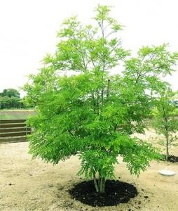 3:シンボルツリー