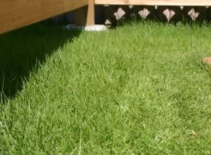 56:芝生